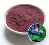 Constructeur de la myrtille Powder/FDA, usine ISO22000