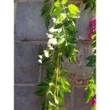 ツルの藤のBracketplantのプラスチック装飾