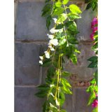 Пластичное украшение Bracketplant глициний лоз