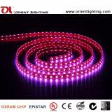 UL aprobados CE SMD5060 RGB LED DE TIRA LA LUZ