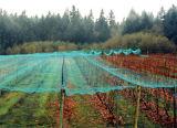 Anti rete nera della grandine per agricoltura