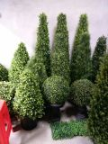 Künstliche Pflanzen und Blumen des Boxwood-Baums Gu828270486