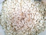 Blanco Nieve de alta calidad de semillas de calabaza gran proveedor