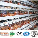 Máquina automática da remoção do estrume da gaiola da galinha da fábrica