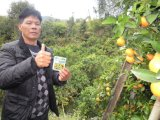 Agrume che pianta con il fertilizzante organico di Unigrow