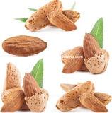 Aprikosen-Startwert- für Zufallsgeneratorauszug des Amygdalin-98% bitterer mit Vitamin B17
