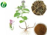 Qualität Chinse Clinopodium-Kraut-Auszugclinopodium-chinensis Auszug/gebrochener Blut-Auszug