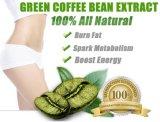 Estratto verde naturale del chicco di caffè di perdita di peso del rifornimento