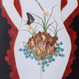 Fresco presionado preservado de la flor para el regalo de la decoración