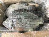 Gefrorene essbare Meerestieretilapia-Fische für Afrika