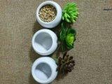 Les meilleurs Succulents artificiels de vente de Gu809205856