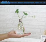 Suporte de vaso de vidro forma Light-Bulb Flower Recipiente de Viveiro