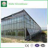 Estufa quente da agricultura da folha do policarbonato da venda de China para o vegetal