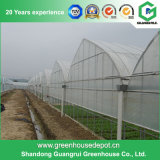 De Plastic Serre van de landbouw voor Groenten/Bloemen