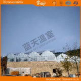 La Cina Supplier F-Clean Multi-Span Film Greenhouse con Glass Wall