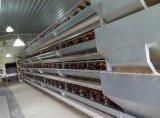 Cage automatique de couche de ferme de poulet de coût bas préfabriqué