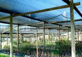 園芸の温室の日曜日の陰システム