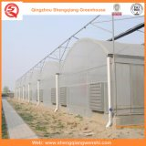 Individual-Span Individual-To bush-hammer Plastic Film Greenhouses with Steel Structure
