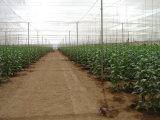 Gartenbaugewächshaussun-Farbton-System