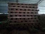 طبيعة جافّ مستقيمة [تونكين] خيزران سياج