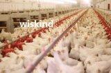 암소 가금 농장 또는 닭장 강철 구조물