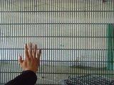 PVCは反上る358の装飾的な防御フェンス/反上昇に溶接された358fence/358の刑務所の塀塗った