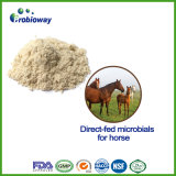 High Viability Direct-Fed Microbial for Horse Antibiotics Replacement