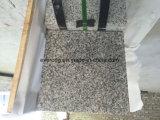 De beste Verkopende Grijze Tegel van het Graniet van Bianco Sardo van het Graniet Nieuwe G602 Opgepoetste