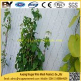 Câble en acier inoxydable Webnet corde souple paysage X-tendent l'écologisation de la vie d'escalade de plantes vertes les systèmes de murs de soutien net