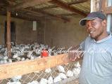 Incubateur automatisé d'oeufs à poulet industriel alimenté par Solar on Christmas Promotion