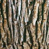 Película verdadera No. hidrográfico W450f1060b de la impresión de la transferencia del agua del diseño de la corteza de árbol