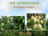 純粋で自然なまたは緑食糧かよい好みのマンゴのフルーツジュースの粉