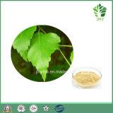 Flavonoides van uitstekende kwaliteit 5% Uittreksel van het Blad van de Berk