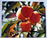 Fruit Oil Painting