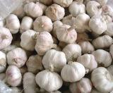 Qualità fresca dell'aglio (il nuovo raccolto 2017) buona