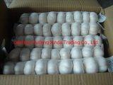 2018 Shandong normal de la nouvelle récolte blanc/ pure et blanche/rouge de l'ail