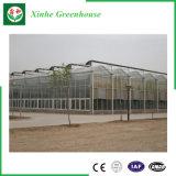 Serre chaude commerciale en verre de norme européenne pour le légume