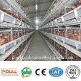 Автоматические клетки цыпленка слоя с системой собрания яичек