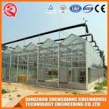 꽃을%s 다중 경간 강철 구조물 유리제 온실
