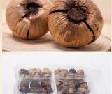 건강한 유기 솔로 까만 마늘 단 하나 정향나무 검정 마늘