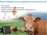 Срок службы батареи Ultra-Long солнечная энергия коровы овцы контейнер водонепроницаемый GPS Tracker Солнечная панель питания, сильных магнитных контакт RF-V26