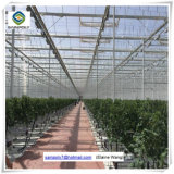 Коммерческие лист гидропонное огородничество выбросов парниковых газов на огурец