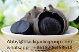 Nuovo arrivo con l'aglio del nero di alta qualità da vendere