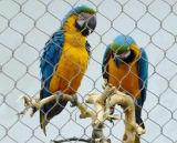 Aviario malla - Cuerda de Acero Inoxidable Inicio Malla de aves