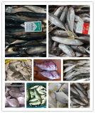 Bevroren Paard - makreel, Makreel, Zwarte Bramen, Zeebaars, Tilapia etc.