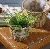 (BC-SF1003) 대중적인 Handmade 자연적인 밀짚 꽃 바구니