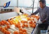 레몬 주스 취향 음료 생산 라인 또는 레몬 주스 충전물 기계