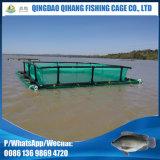 Système carré de cage de pisciculture pour la culture de Tilapia