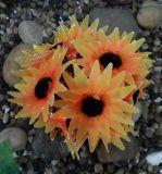 Lumière solaire en fibre optique de fleurs de fleurs, Tigerlily