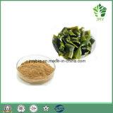 Polysaccharides de poudre d'extrait de varech de soins de santé 85%, Fucoxanthin 10%